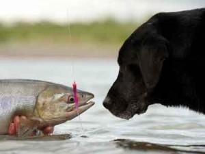 Описторхоз у собак