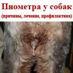 Пиометра у собак (гнойный эндометрит)