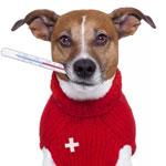 Грипп у собак симптомы и лечение thumbnail