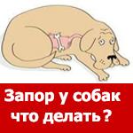 Чихуахуа запор что делать. Запор у собаки: как помочь питомцу