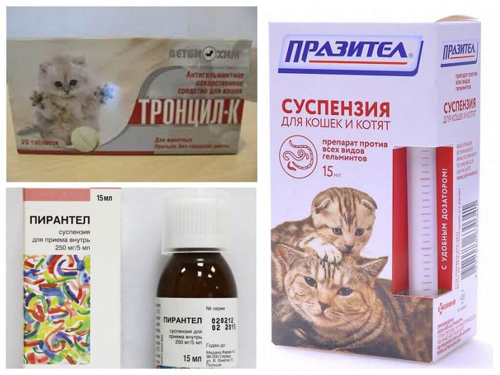Чесотка у кошек: причины, профилактика, лечение