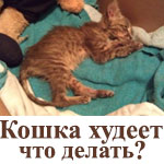 Кошка без причины сильно худеет