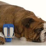 Клинический случай инсулиномы у собаки
