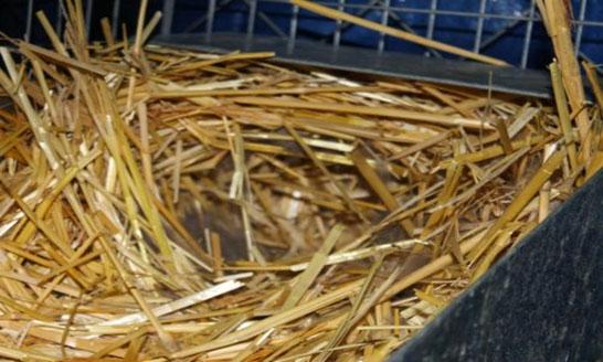 Беременность у крольчихи