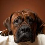 Язвенный геморрагический колит у собак thumbnail