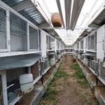 Разведение кроликов в домашних условиях: всё по пунктам