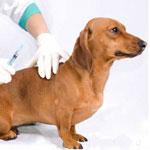 Профилактика Болезней у животных
