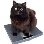 Профилактика ожирения кошек и собак