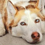 Собака друг или недруг?
