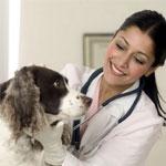 Осмотр собаки у врача