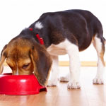 Основы кормления собак