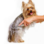 Уход жа шерстью собаки