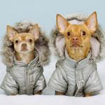 Все об иммунитете у собак