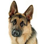 Патология репродукции у собак