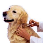 Хламидиоз собак