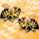 Солевой токсикоз пчел