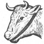 Тимпония КРС