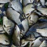 Рыба в питании человека