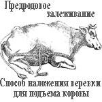 Залеживание перед родами у животных