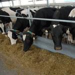 Акушерско-гинекологическая диспансеризация в сельскохозяйственных предприятиях