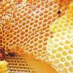 выделение пчелами воска