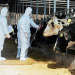 Мероприятия по борьбе с туберкулезом животных