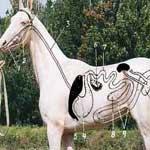 Хроническое расширение желудка у лошади