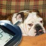 Несахарный диабет у животных