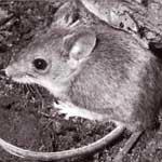 Отравления животных соединениями цинка