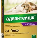 Блохи у кошек: симптомы, диагноз, как избавиться, препараты, Ветеринарная служба Владимирской области