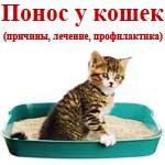 Понос у кошки причины и лечение в домашних условиях 882